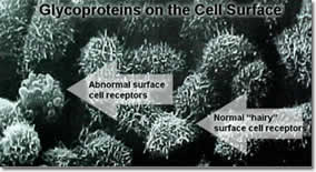 electron image of glycosylated cells