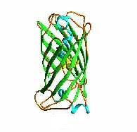 typical amino acid protein chain