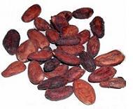 green cocoa beans